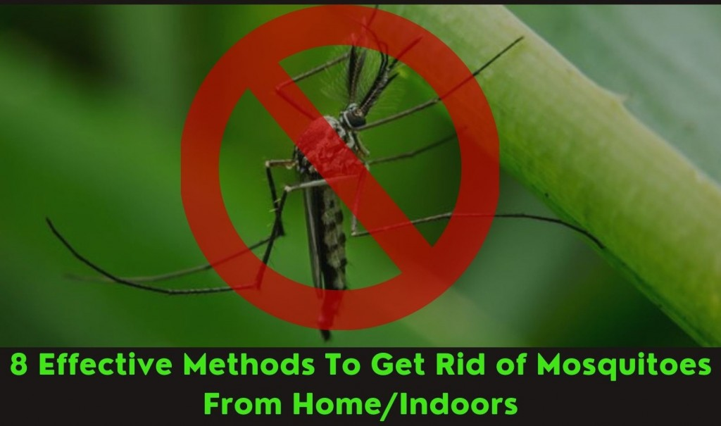 Get rid off mosquitoes from indoors
